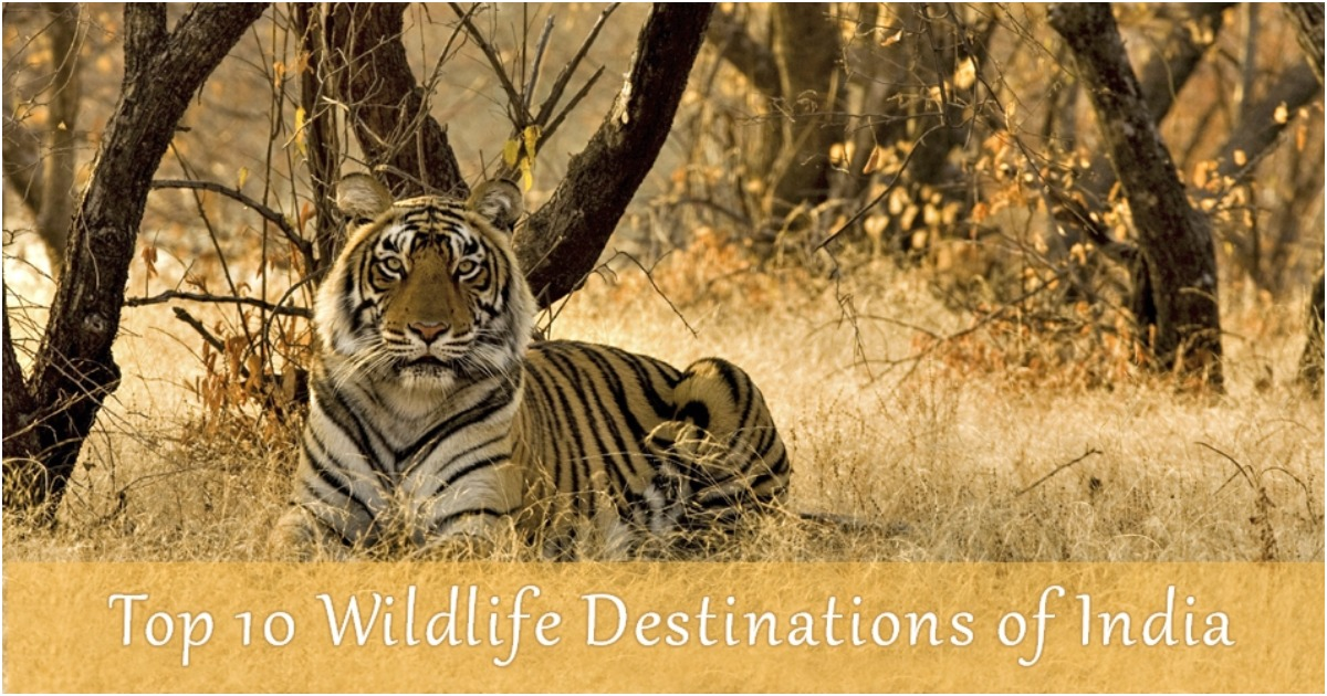 top 10 wildlife destination of india