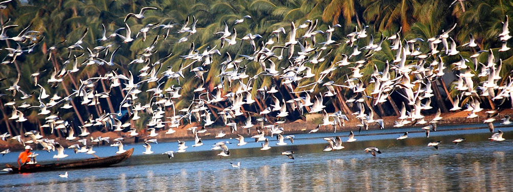 kumarakom-bird-sanctuary