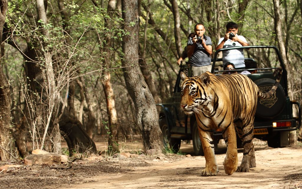 jungle safari for first timer traveller in india