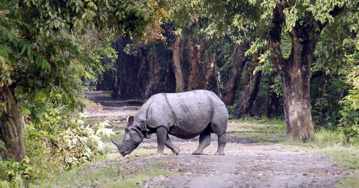 kaziranga national park assam - world heritage sites in india