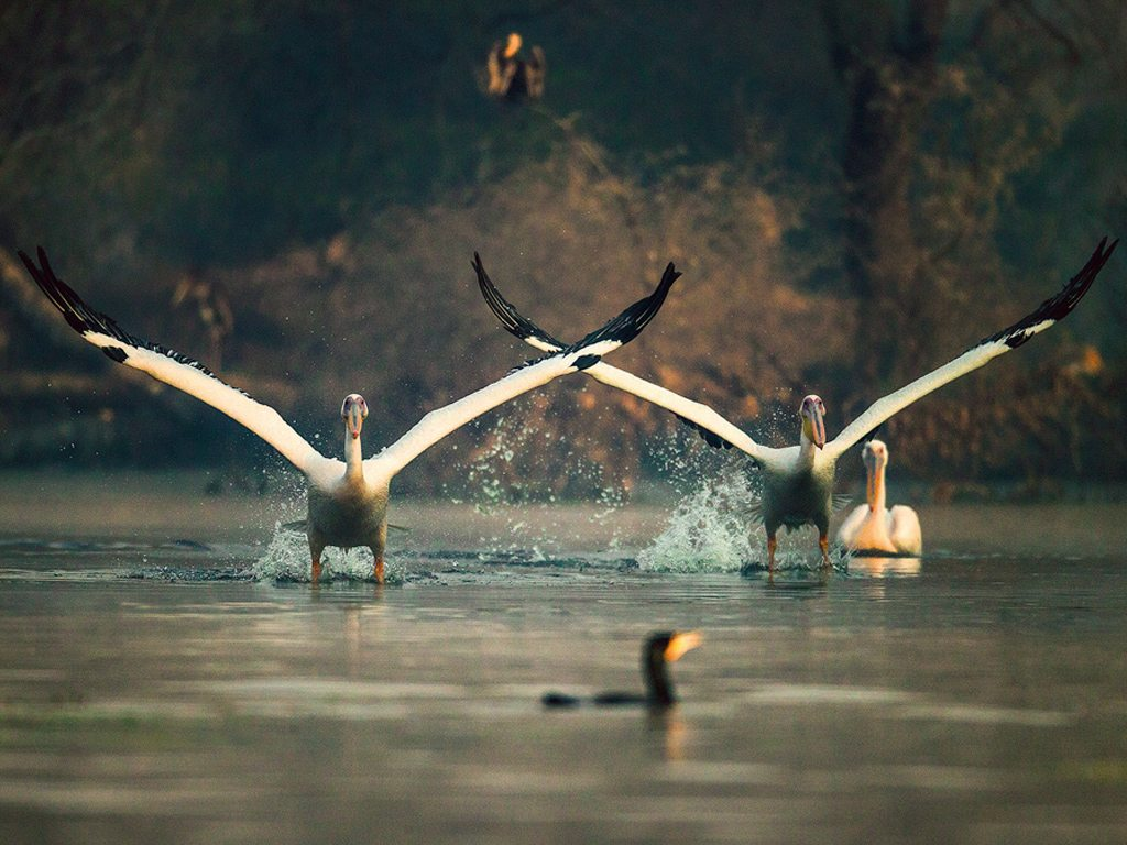 keoladeo bharatpur bird sanctuary - world heritage sites in india