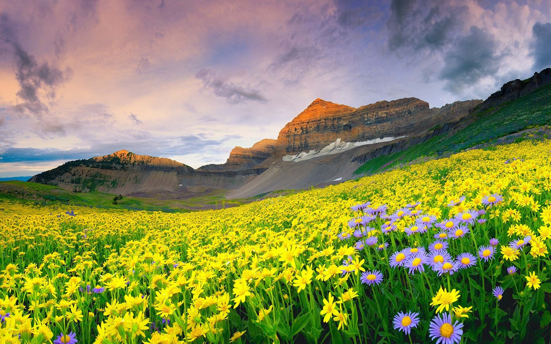 valley of flowers national park - world heritage sites in india