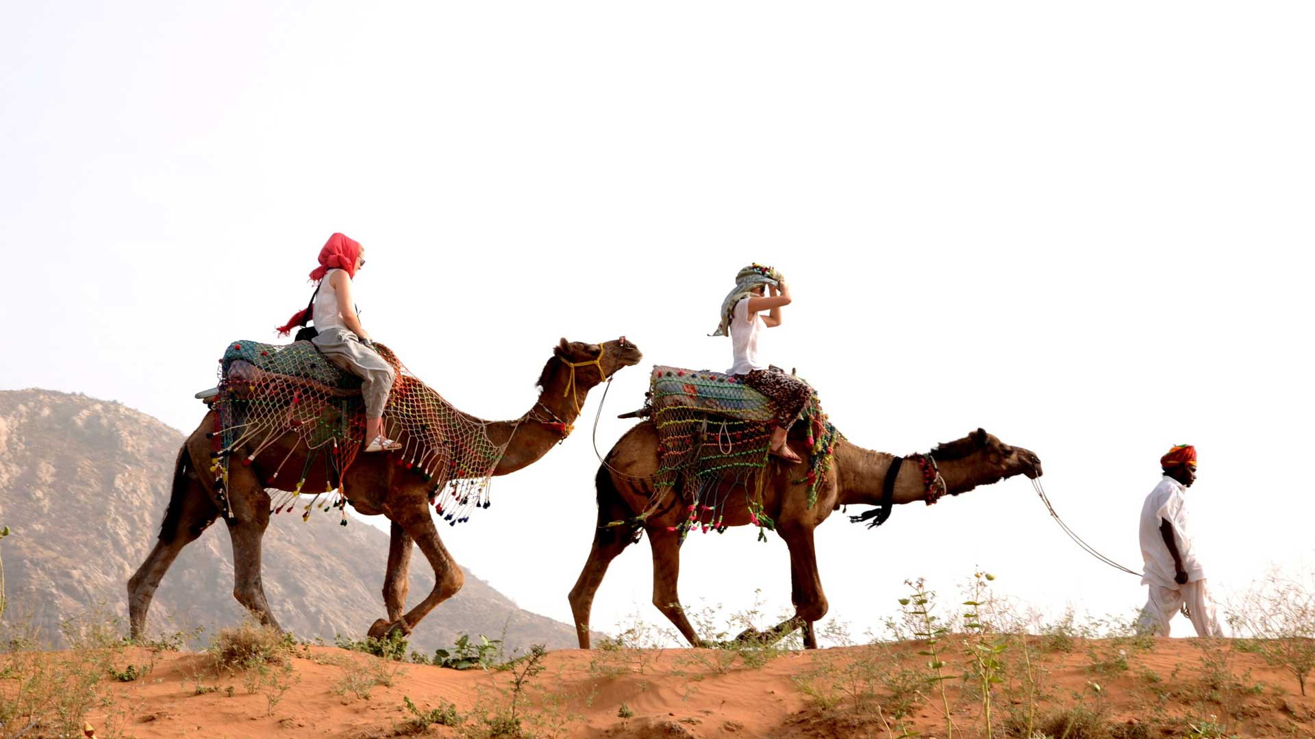 pushkar camel safari camel ride - desert cities in rajasthan