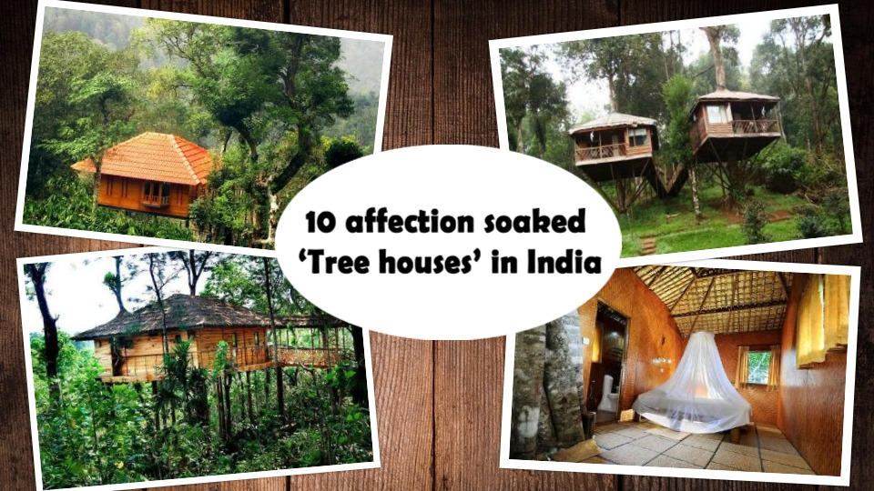 tree houses in india