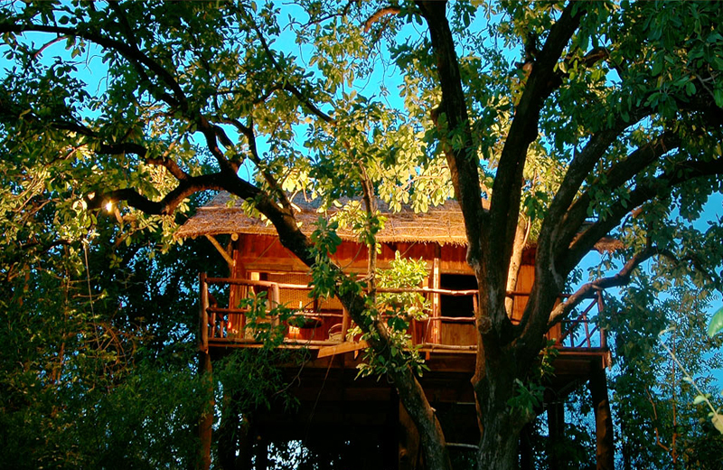 tree house by travelsite india