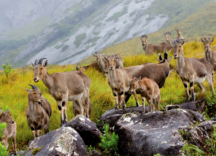 Eravikulam National Park by Travelsite India