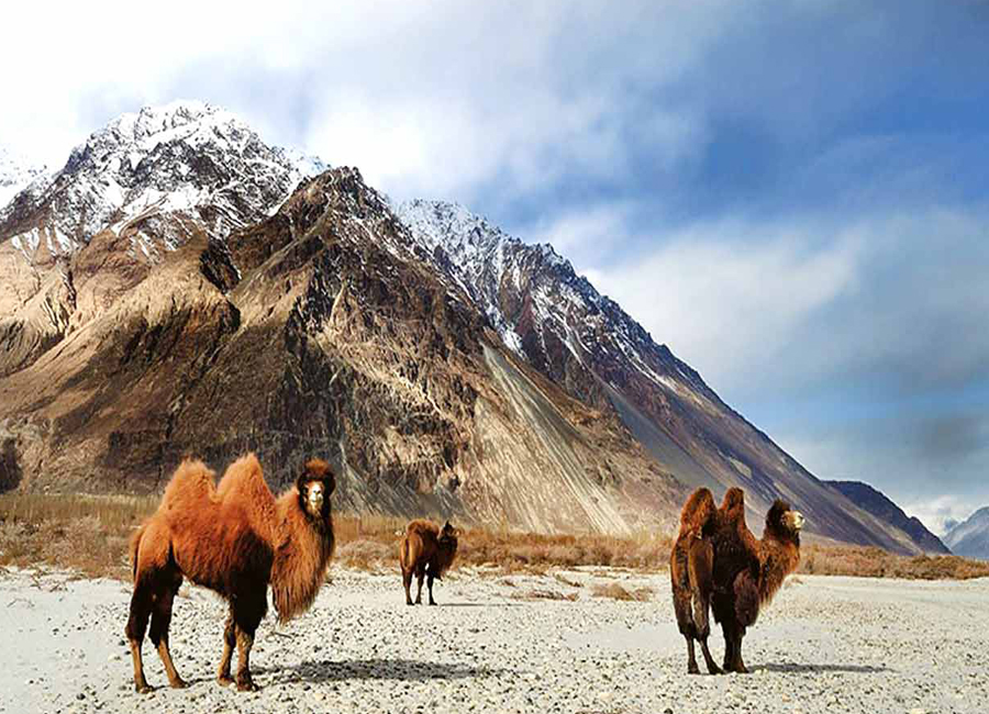 Hemis-National-Park-leh-ladakh by travelsite india