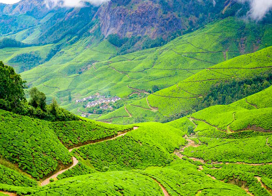 kolukkumalai-tea-munnar by Travelsite India