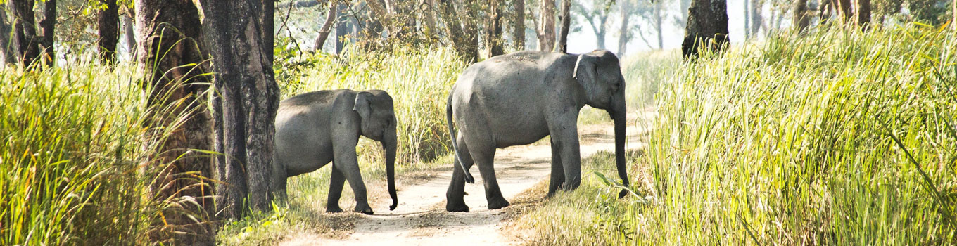 Golden Triangle India Wildlife Tour