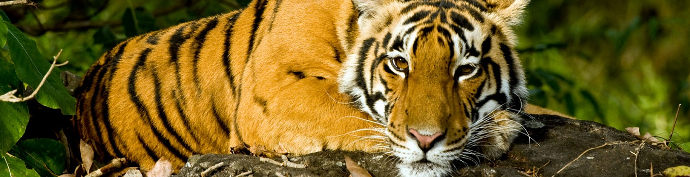 Kerala Wildlife Tour Packages