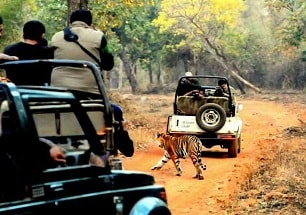 wildlife tour packages in india