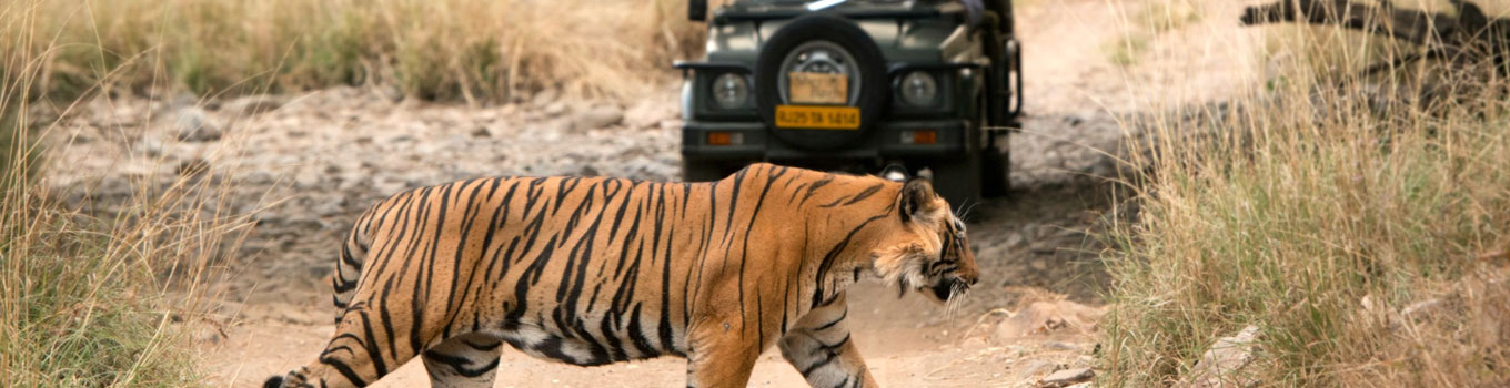 8 Day Golden Triangle With Ranthambore