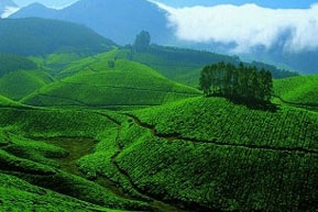 Golden Triangle and Scenic Kerala Tour