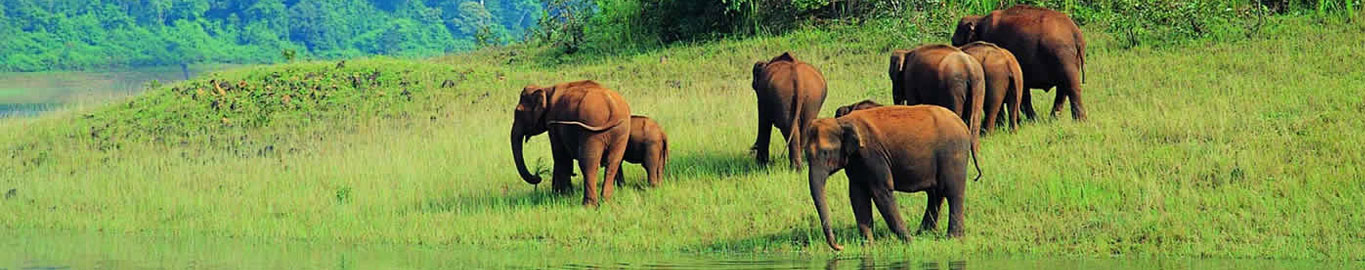 Exotic South India Wildlife Tour