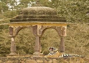 india wildlife tour packages