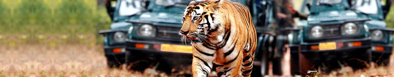North India wildlife tour Packages