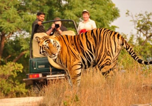 best wildlife tours in india